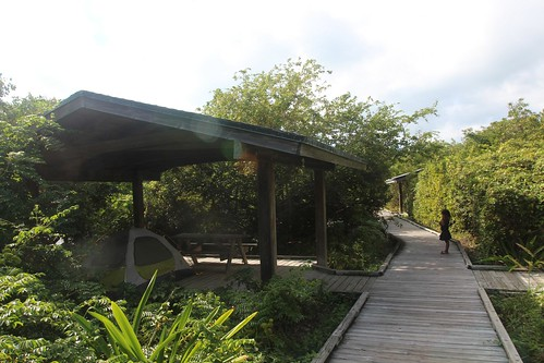 Day 140: A walk through the tropical hammock.