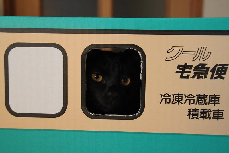 クロネコヤマトのダンボールと黒猫
