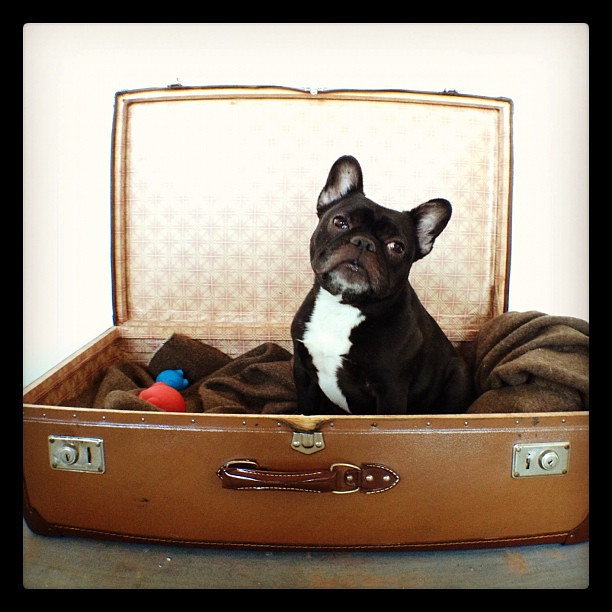 Dog Bed In Suitcase