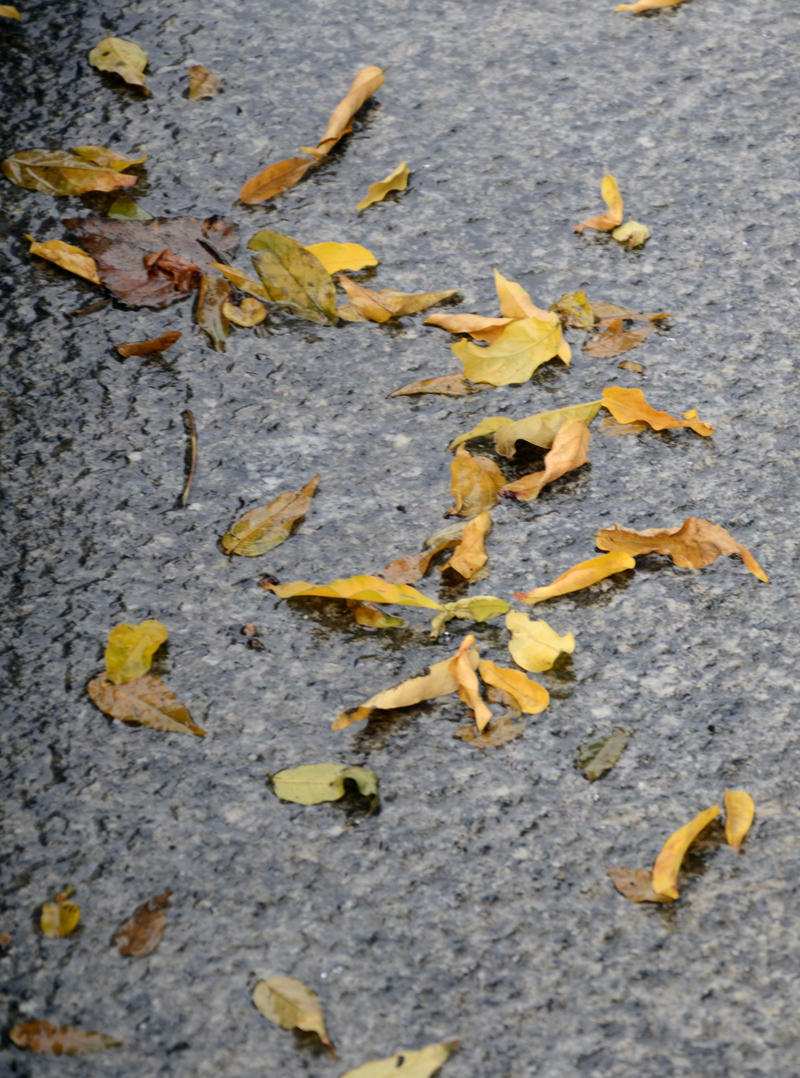 folhas no chão molhado