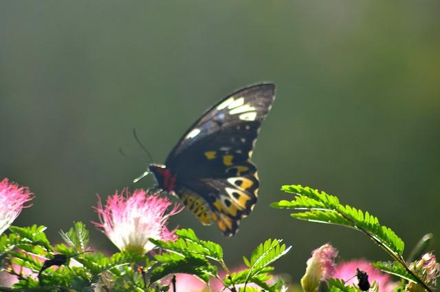 butterfly eat