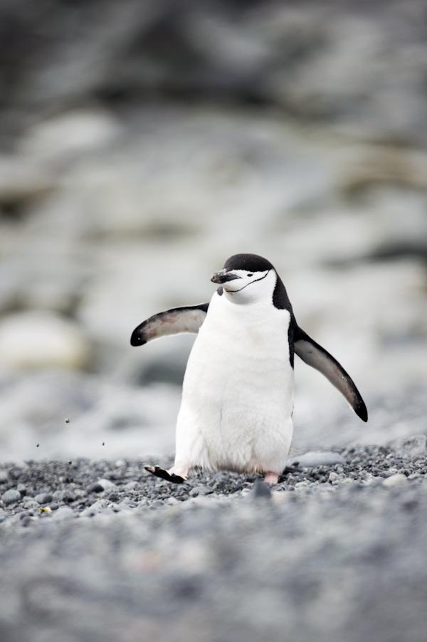 RYALE_Antarctica_Penguins-12
