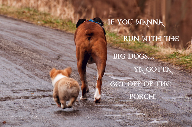 Runnin' with the Big Dogs