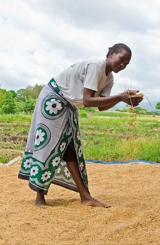 tanzania women rice statedepartment worldfoodprogram usun