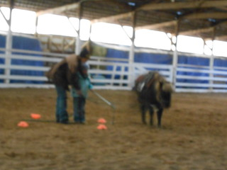 Horse Lessons- 18Jan13 (13)