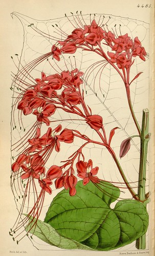n209_w1150 by BioDivLibrary