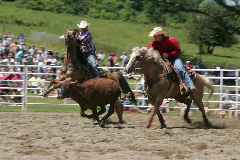 Riding up to a steer at the Ellicottville Championship Rodeo by Jessica