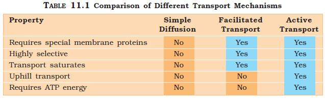 NCERT Class XI Biology: Chapter 11 - Transport in Plants