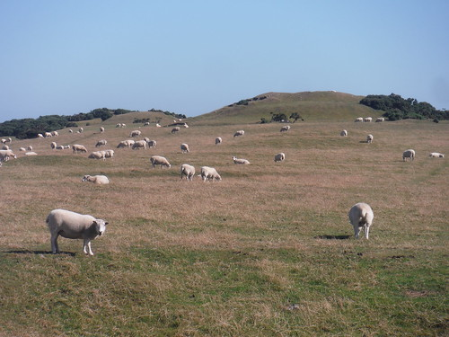 Barrows and Sheep on Bronkham Hill