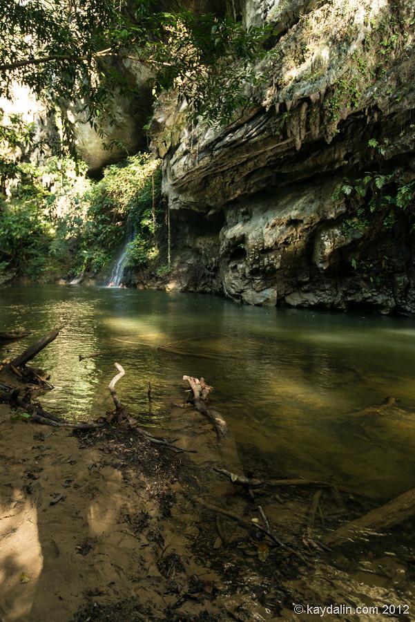 Mulu rain forest