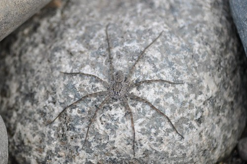 Unidentified Spider (naming suggestions?)
