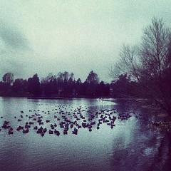 DuckCon 2012