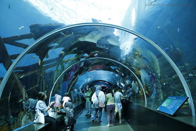 RWS S.E.A Aquarium 416