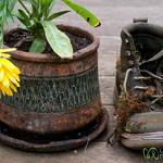 Boot and Flower Pot - Bainbridge Island, Seattle