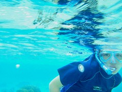marine biology(0.0), diving(0.0), underwater diving(1.0), swimming(1.0), sports(1.0), recreation(1.0), outdoor recreation(1.0), azure(1.0), swimmer(1.0), water sport(1.0), underwater(1.0), freediving(1.0),
