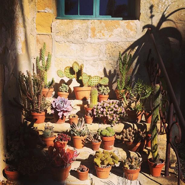 Cactus love....