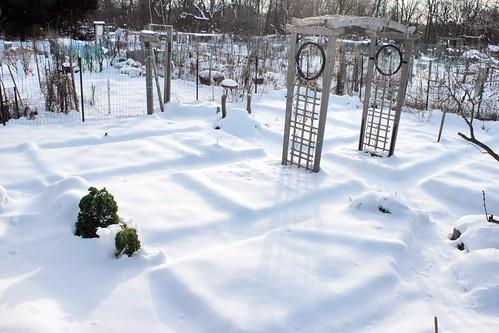 snow on my community garden plot IMG_0053