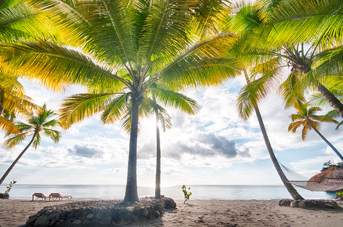 Photo:palm trees By:j