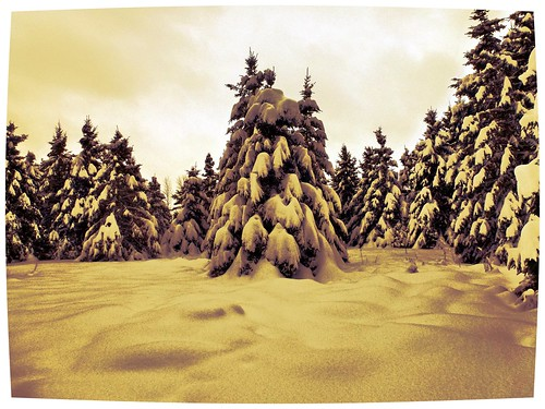 trees sky white snow canada cold green landscape january evergreen me2youphotographylevel2 me2youphotographylevel3 me2youphotographylevel1 me2youphotographylevel4