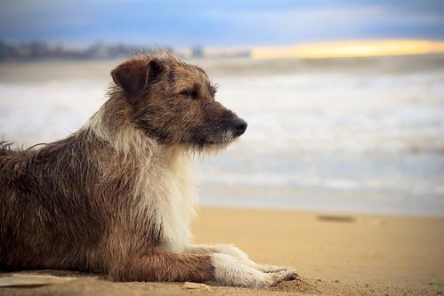 [フリー画像素材] 動物 (哺乳類), 犬・イヌ ID:201301061000