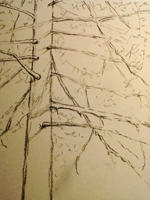 20121231_step1_pine
