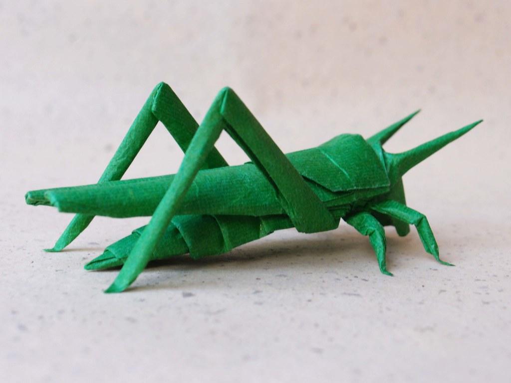 Locust Opus 430 Back