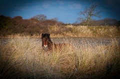 Horse spot on..