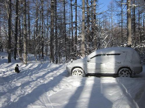 新年初の大雪 2013年1月15日9:09 by Poran111