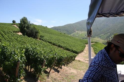 Montes wine tour