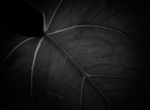 Day #020 - Leaf X-Ray