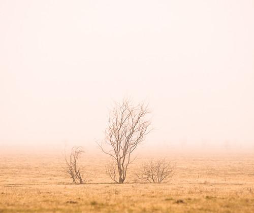 Fog Trees-1800