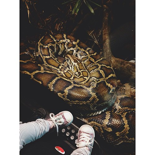 Afternoon at the zoo. #365 #project365 #vscocam #instavsco #vsco #instadfw #afterglow #zoo #python