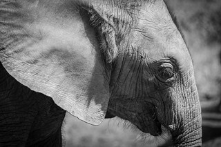 Safari-1395