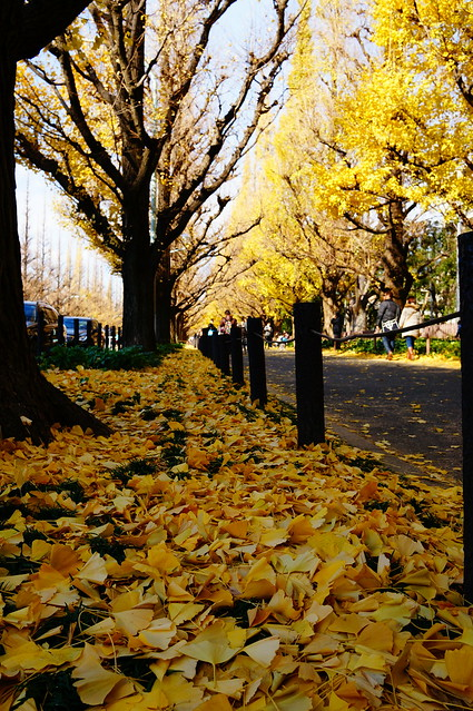 yellow leaves road