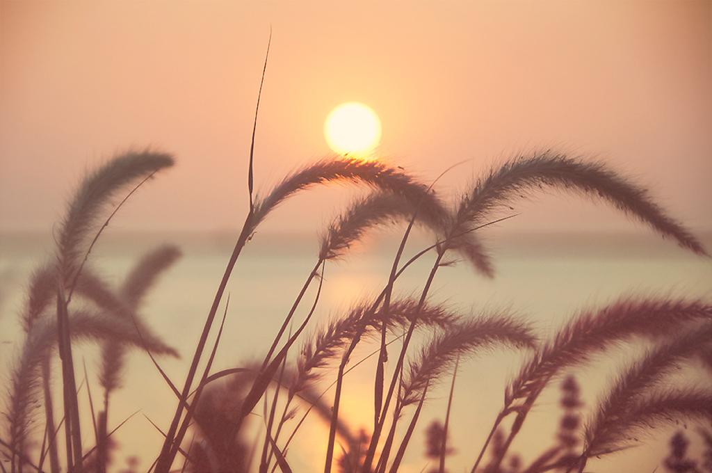 Sultry Butterscotch Sunrise