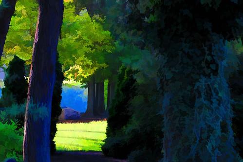 trees tree sunshine rock evening shadows view bright cluster ivy boulder evergreens distance lookingthrough glenwoodgardens topazsimplify forsitting lookingbetween eveninglightlatesummer