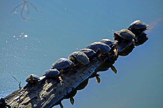 Turtle Club, Sea Pines Forest Preserve, December 14, 2012, by John Dreyer