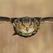 European Eagle Owl by Madhawa
