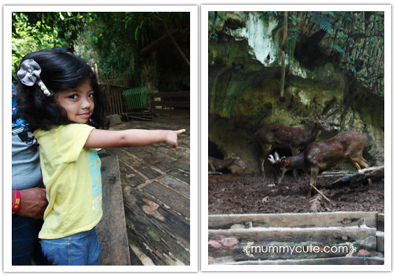 8285497477 4d320ddd73 z Bercuti di lost world of tambun 2 | Rainforest Trail