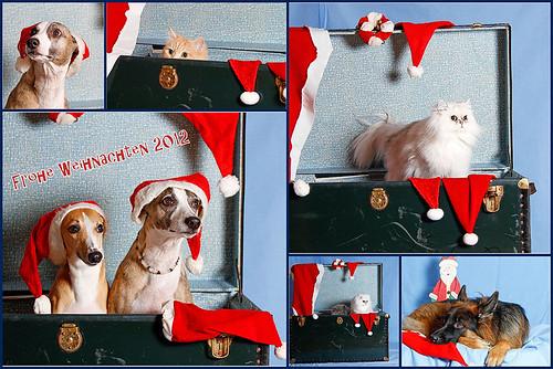 Weihnachten 2012SabineLennoxBenjiBuddy