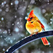 Happy Holidays by Jeff Clow