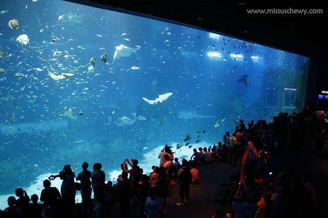 RWS S.E.A Aquarium 649