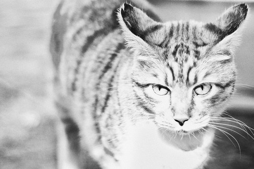Semplicemente Felino by CristianaCascioli