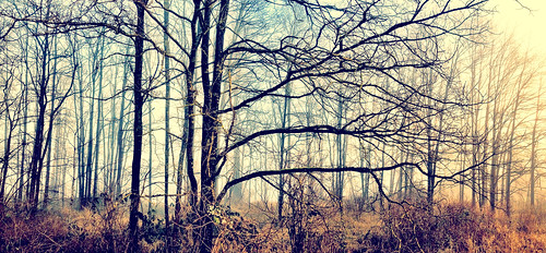 panorama forest photostream iphone ipad2 iphone4s