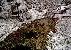 Herbstbach verschneit