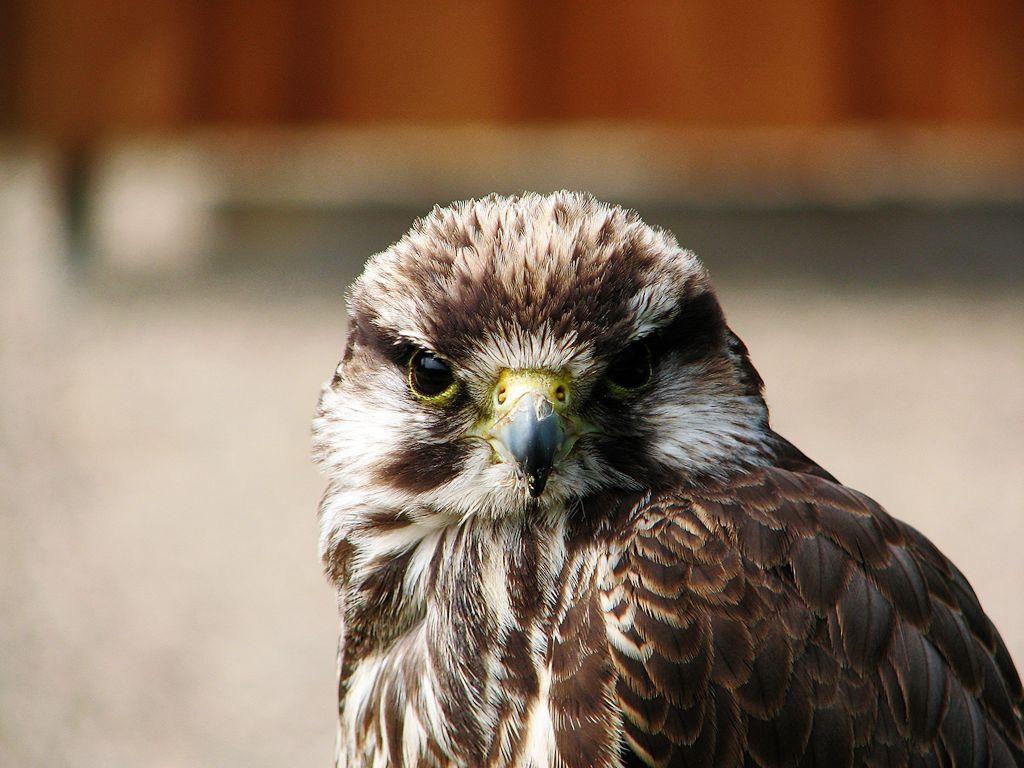 Vogel im Neunkircher Zoo