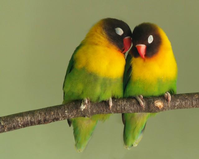coppia di uccellini, bird house, casetta per uccellini, birds picture, foto di animali