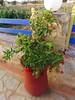 Kreta 2008 377