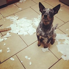 The paper towels on the counter weren't for me?!