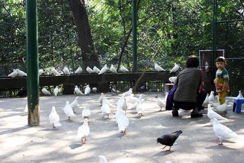 china children pidgeons doves yibin cuipingpark